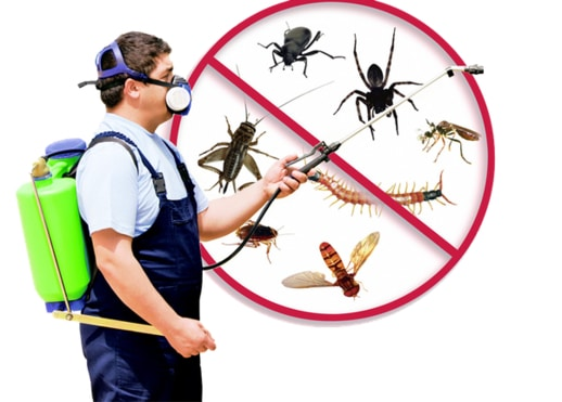 Pest Control Removal